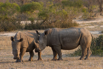 SouthAfrica-62